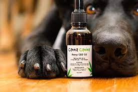 Benefits of Using CBD For Dogs